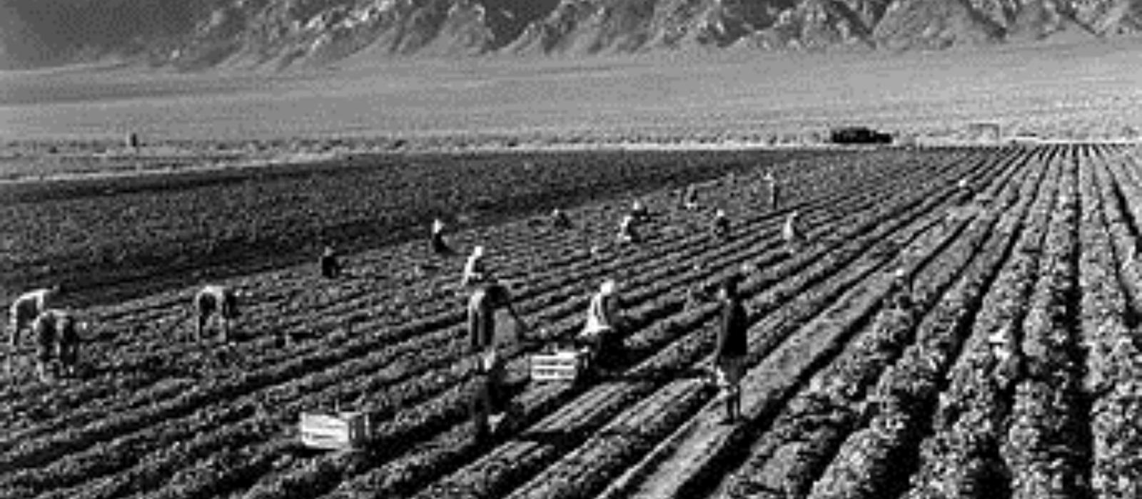 fieldworkers